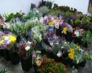 wedding flower wholesalers
